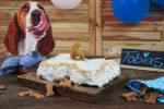 Bark Bone Cake - Fresh Dog Birthday Cake
