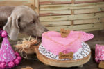 My Heart Is Yours dog cake
