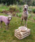 Homemade dog treats & fresh dog cakes by Cooka's Cookies