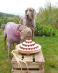 Special dog cake by Cooka's Cookies